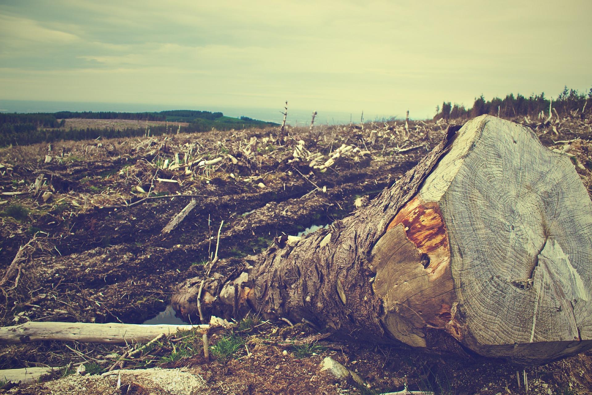 Lee más sobre el artículo La Deforestación Ayuda a Propagar Enfermedades y Virus